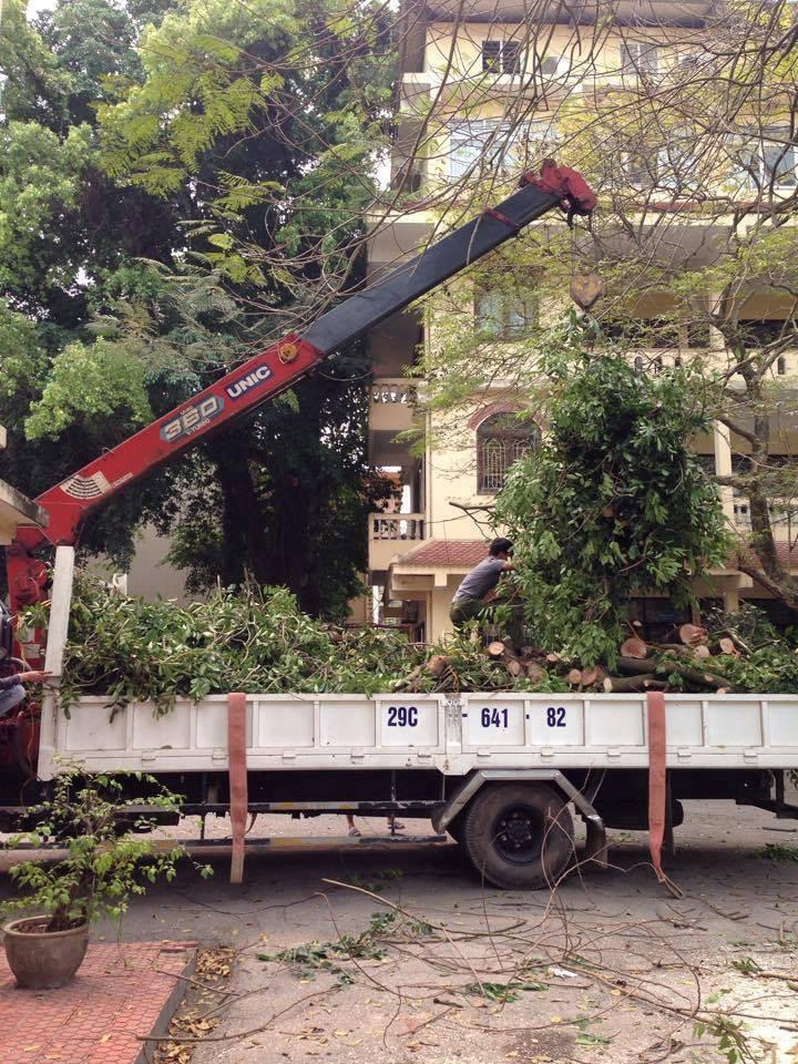 Dịch vụ chặt cây tại hà nội