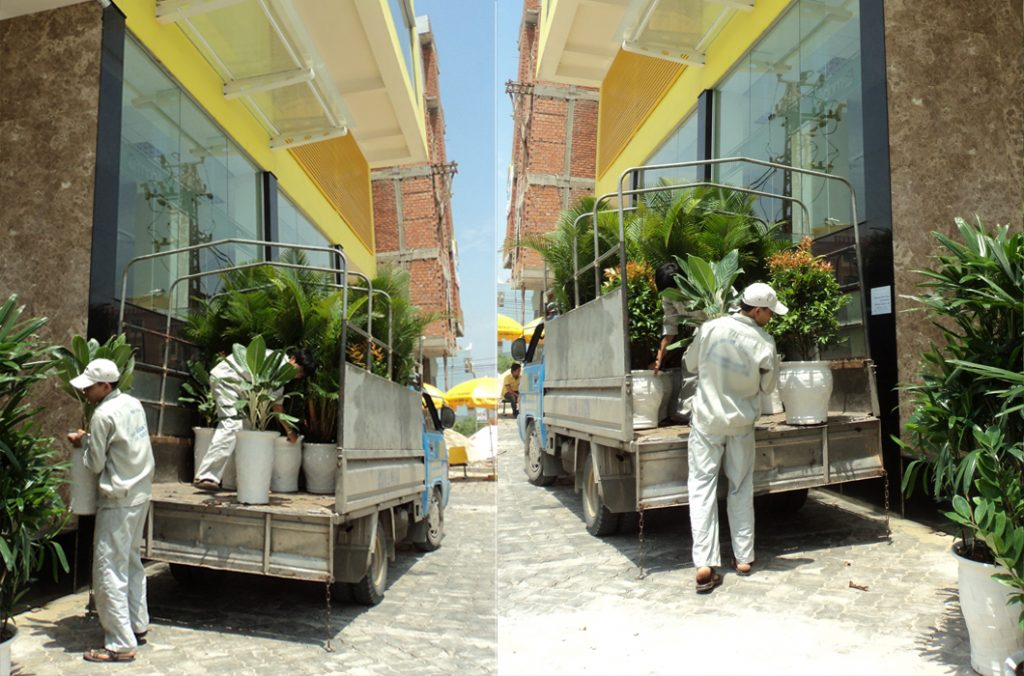 Cho thuê cây cảnh tại Hà Đông Hà Nội